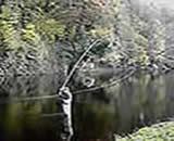 The weight of the fly line in the D Loop assists the rod spring as the cast takes place.